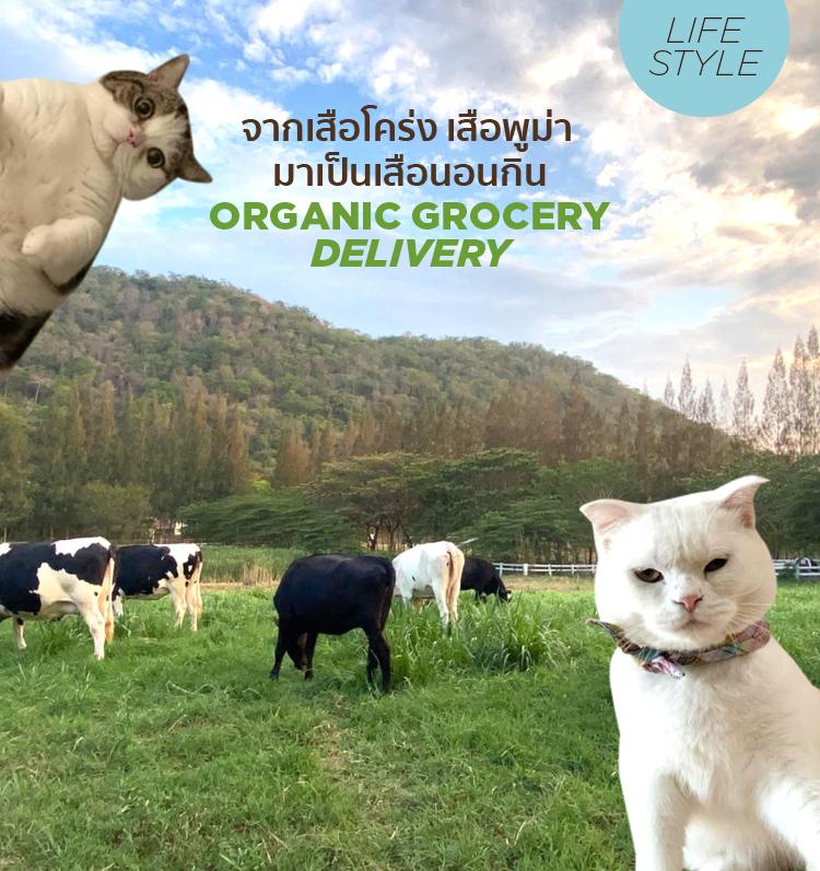 จากเสือโคร่ง เสือพูม่า มาเป็นเสือนอนกิน : Organic Grocery Delivery